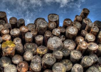 Stammholz kaufen beim Holzhändler